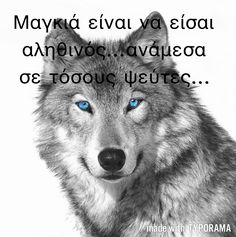 The story of Little Red Riding Hood needs the wolf to move forward. Your sorry needs the wolf.Your life needs the wolf. Wolf Photos, Wolf Pictures, Animal Pictures, Wolf Images, Beautiful Creatures, Animals Beautiful, Tier Wolf, What Animal Are You, Malamute