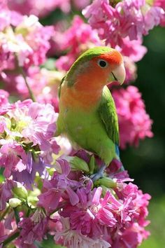 Annalisa loves to stay at the Cottage, and always sits on the branches that show off her beautiful colors.