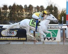 Hansen, 138th KY Derby horse   A white horse is rare in the Derby!