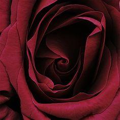 Red Velvet by Kate Scott, via 500px