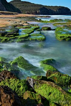 a61b7b901a0e5 Moss at Turimetta Beach