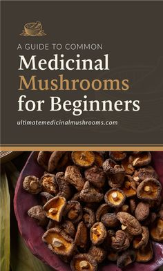 Check out this beginner's guide to common medicinal mushrooms. This is a helpful tool to learn which types of mushrooms are used for. Healing Herbs, Medicinal Herbs, Holistic Healing, Growing Mushrooms At Home, Mushroom Benefits, Mushroom Varieties, Mushroom Tea, Meat Substitutes, Best Protein