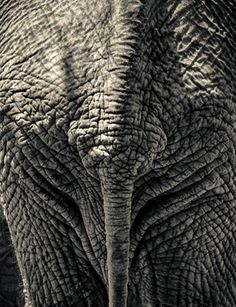 "Saatchi Art Artist Jan du Toit; Photography, ""Pachyderm"" #art"