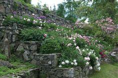 Peony Garden | On graded hillside with steps, at Innisfree Garden, Hudson Valley.