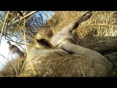 Incredible Wildlife Footage Shows Lioness Hunt Prey With GoPro Camera Mounted to Its Body | Video | TheBlaze.com