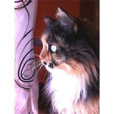 For More Cat Posts Visit  www.luvurcats.com