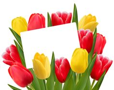 Transparent Red and Yellow Tulips Decoration PNG Clipart Picture Wedding Anniversary Wishes, Anniversary Dates, Yellow Tulips, Tulips Flowers, Flower Frame, Flower Art, Free Vector Images, Vector Free, Share Pictures