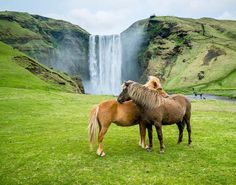 "64.6k Likes, 1,306 Comments - ChrisBurkard (@chrisburkard) on Instagram: ""Lessons learned from Icelandic Horses: If you find something you love, don't let it go."""