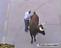 """""""O Grito do Bicho"""": Touro enfurecido reconhece seu dono durante uma co..."""