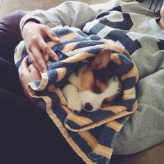 Milo | The 25 Cutest Corgi Puppies Currently Online