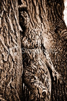 Body Painting Tree Camouflage