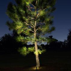 Patio Lighting, Tree Lighting, Landscape Lighting, Copper Lamps, Led Fixtures, Spotlight, Garden Ideas, Home And Garden, Deck