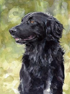 "Black retriever watercolor 5x7"" painting 2011"