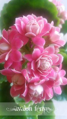 Zöld/Magenta virág Green/Magenta flower