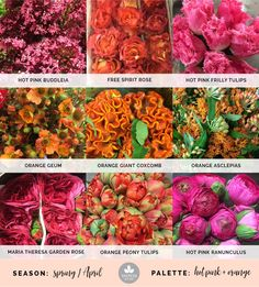 85 best flower names images on pinterest in 2018 beautiful flowers mayesh cooler picks spring hot pink orange products top mightylinksfo