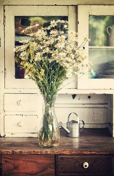 vignette with daisies