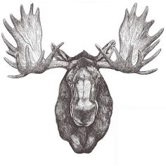 Colorado Native by Jake Weidmann, Master Penman (Cool Sketches With Quotes) Bison Tattoo, Moose Tattoo, Moose Head, Moose Art, Antler Drawing, Tattoo Homme, Wilderness Tattoo, Moose Pictures, Hunting Tattoos