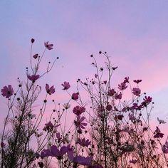 ☁️ shades of spring 🌸