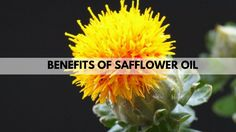 Benefits of Safflower Oil - Diabetes, Vitamin - E ,Healthy Fat Safflower Oil, Healthy Fats, Make It Simple, Diabetes, Benefit, Vitamins, How To Get, Marketing, Fitness