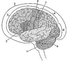 brain_01 by Fast Company, via Flickr