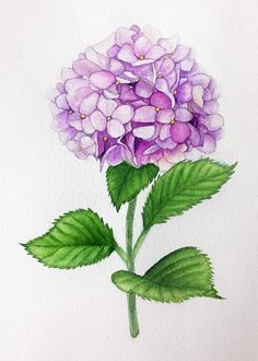 Hydrangea by Unknown Watercolor Cards, Watercolor Flowers, Watercolor Paintings, Art Floral, Fabric Painting, Painting & Drawing, Watercolor Techniques, Botanical Prints, Flower Art