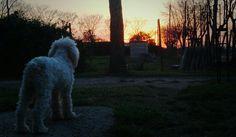 Contemplando el cielo divino...