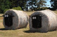 Hay bale sheep.