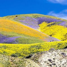 This super bloom at Carrizo Plain National Monument created a palette of colors.  : Courtesy of the U.S. Bureau of Land Management