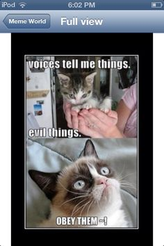 Listen to the angry cat