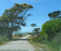 Parque Nacional de Santa Teresa, Rocha, Uruguai.  Foto : Cida Werneck