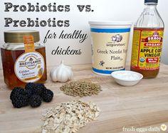 Probiotics vs. Prebiotics in a Chicken Diet   Fresh Eggs Daily