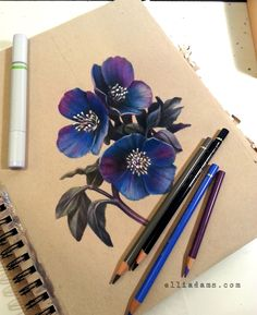 Black Hellebore and crescent moon on toned paper with colored pencils, markers and metallic ink. I used the Strathmore toned tan sketchbook with Copic markers, prismacolor markers and Faber Castell Polychromos colored pencils.
