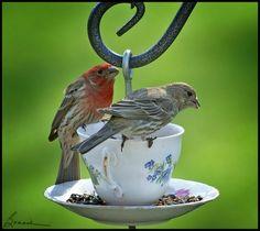 cup-and-saucer.jpg 450×402ピクセル