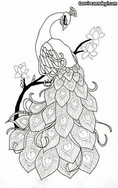 Peacock Outline, Peacock Drawing, Peacock Tattoo, Peacock Painting, Peacock Art, Peacock Sketch, Peacock Design, Glass Painting Patterns, Glass Painting Designs