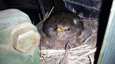 Bird nesting on chicks