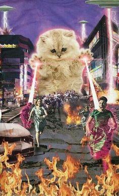 Comando Valquiria - My list of the most beautiful artworks Cute Cat Wallpaper, Trippy Wallpaper, Cute Cats, Funny Cats, Gatos Cool, Photos Originales, Funny Cat Photos, Retro Futurism, Psychedelic Art