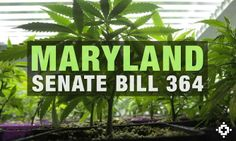 Maryland Senate Approves Cannabis Decriminalization Measure