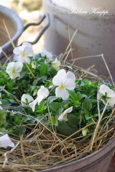 ~spring sweetness~