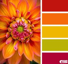 Color Inspiration  Color Palette