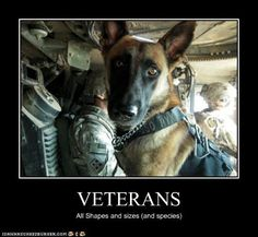 Veterans- Did you know military dogs are given the rank one above the handler to reinforce that the handler respect the dog! Thank you to all veterans, 2 and 4 legged!