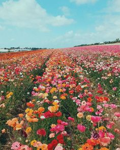 First Day of Summer? Ill take this field of flowers every day. via designlovef - Beautiful places - Blumen Nature Aesthetic, Flower Aesthetic, Wild Flowers, Beautiful Flowers, Beautiful Places, Field Of Flowers, Flowers Nature, Photo Wall Collage, Picture Wall