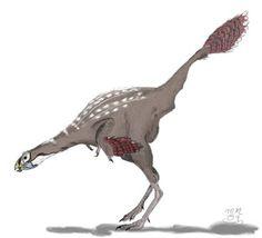 Caudipteryx zhoui
