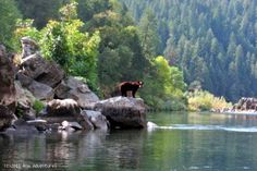 Wildlife along the Rogue River. ROW Adventure's Oregon hiking adventure.