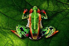 """If you're scratching your head trying to figure out how many humans Johannes Stötter decided to cram into his """"Frogs"""" photo, it's five."""