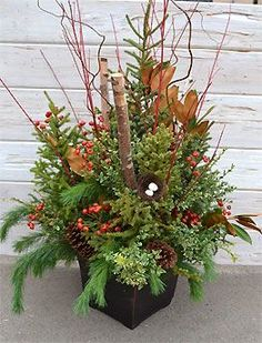 Plant by numbers photos & Instructions for Container gardening