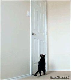 Playful Paws: 12 Hilarious Cat GIFs