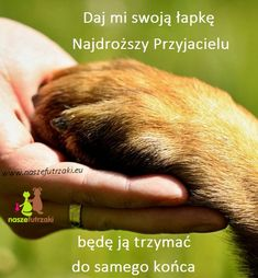 My Best Friend, Best Friends, Peace And Love, Dogs, Cute, Animals, Animal Pictures, Quote, Beat Friends