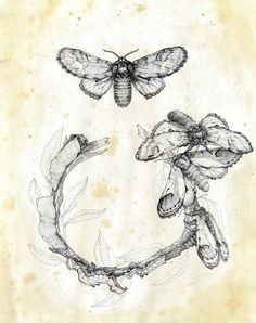Sophie Hedon  [Fleur intestinale]: