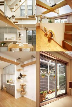 SO COOL! I want this in my house. It is the perfect way for me to have the cats and dogs out together.
