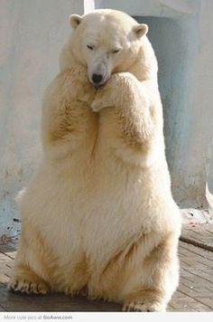 Cute looking Polar Bear